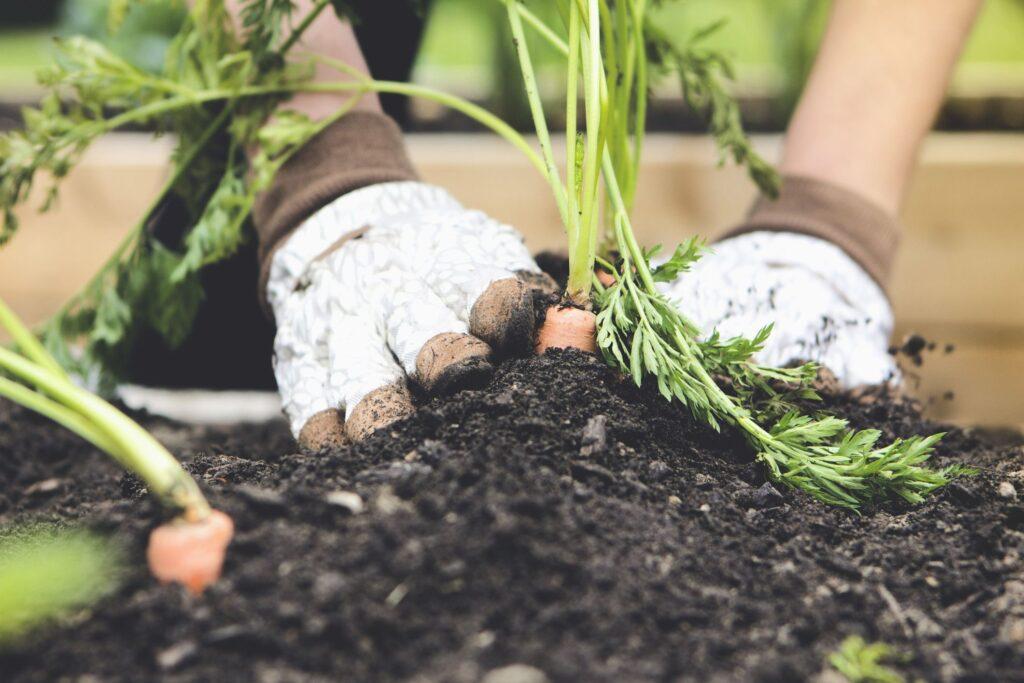 Home And Garden Tips