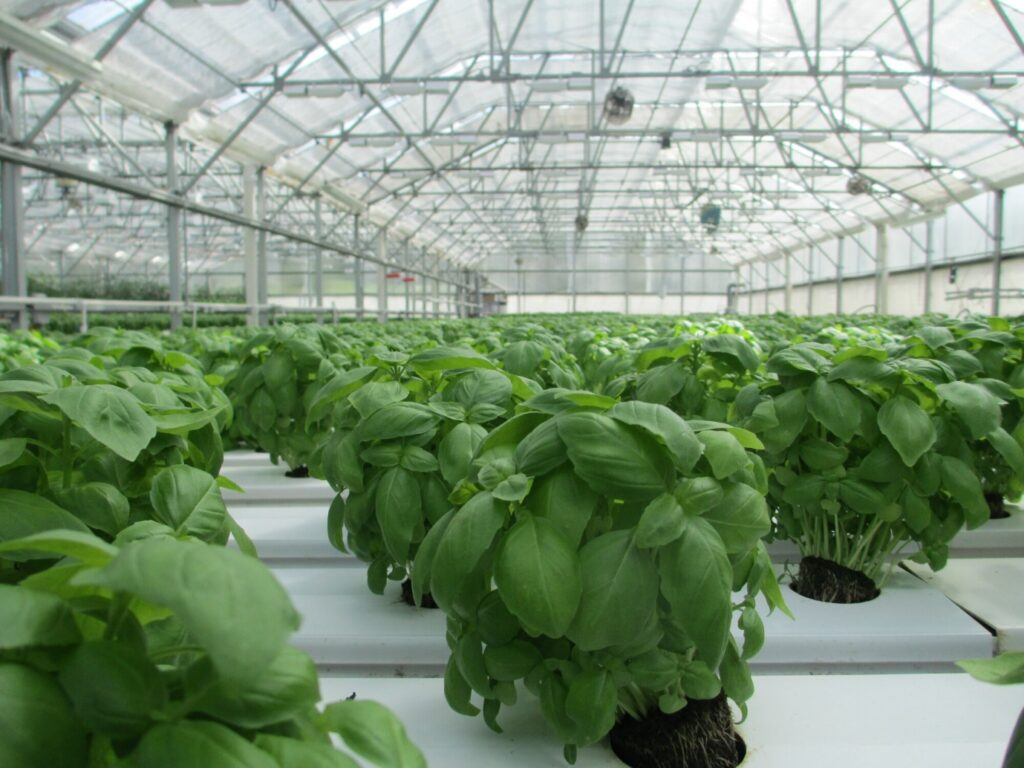 What to Know About Working in a Plant Nursery