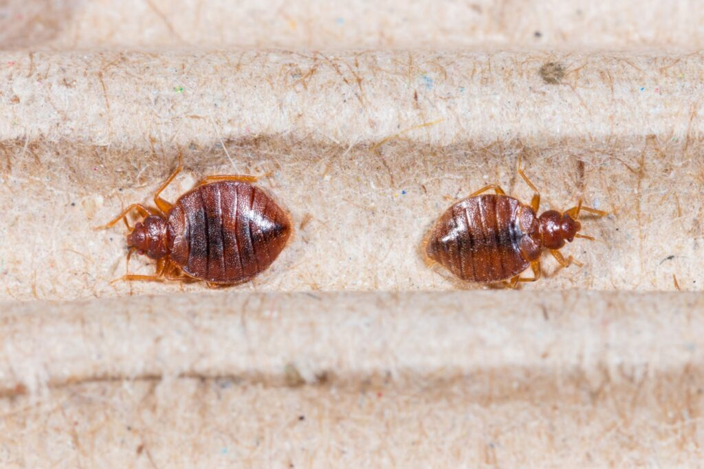 Look Out For These 7 Early Signs of Bed Bugs