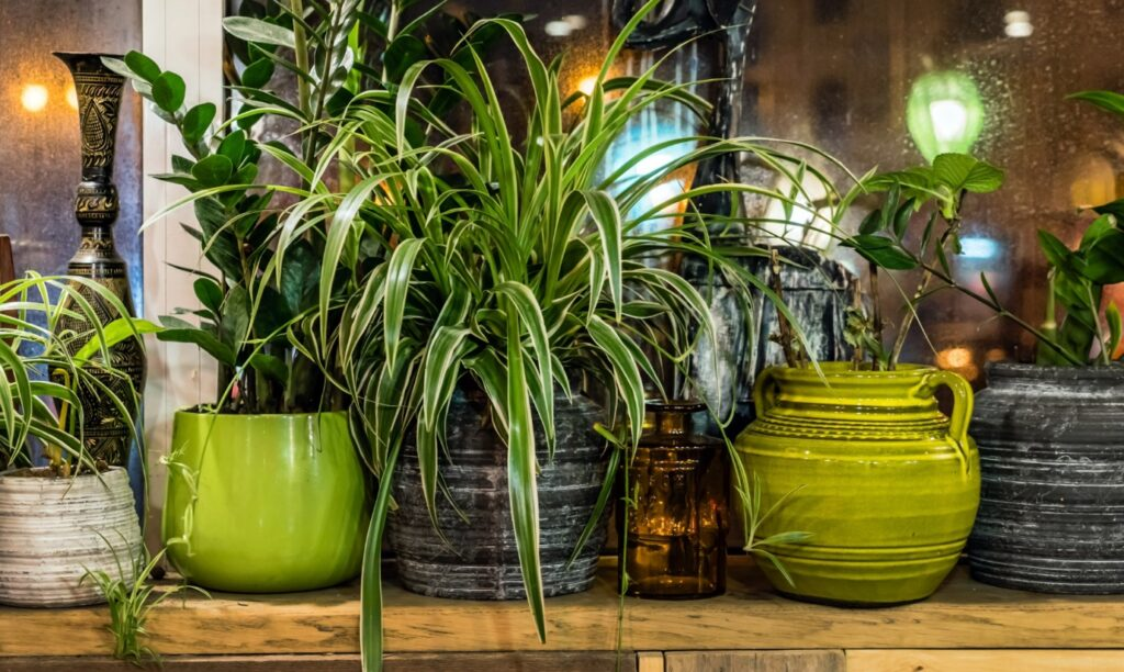 Top 6 Best Houseplants for People With Pets